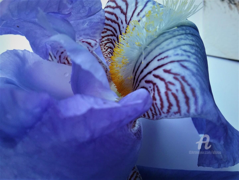 Claudette Allosio - coeur-iris2.jpg