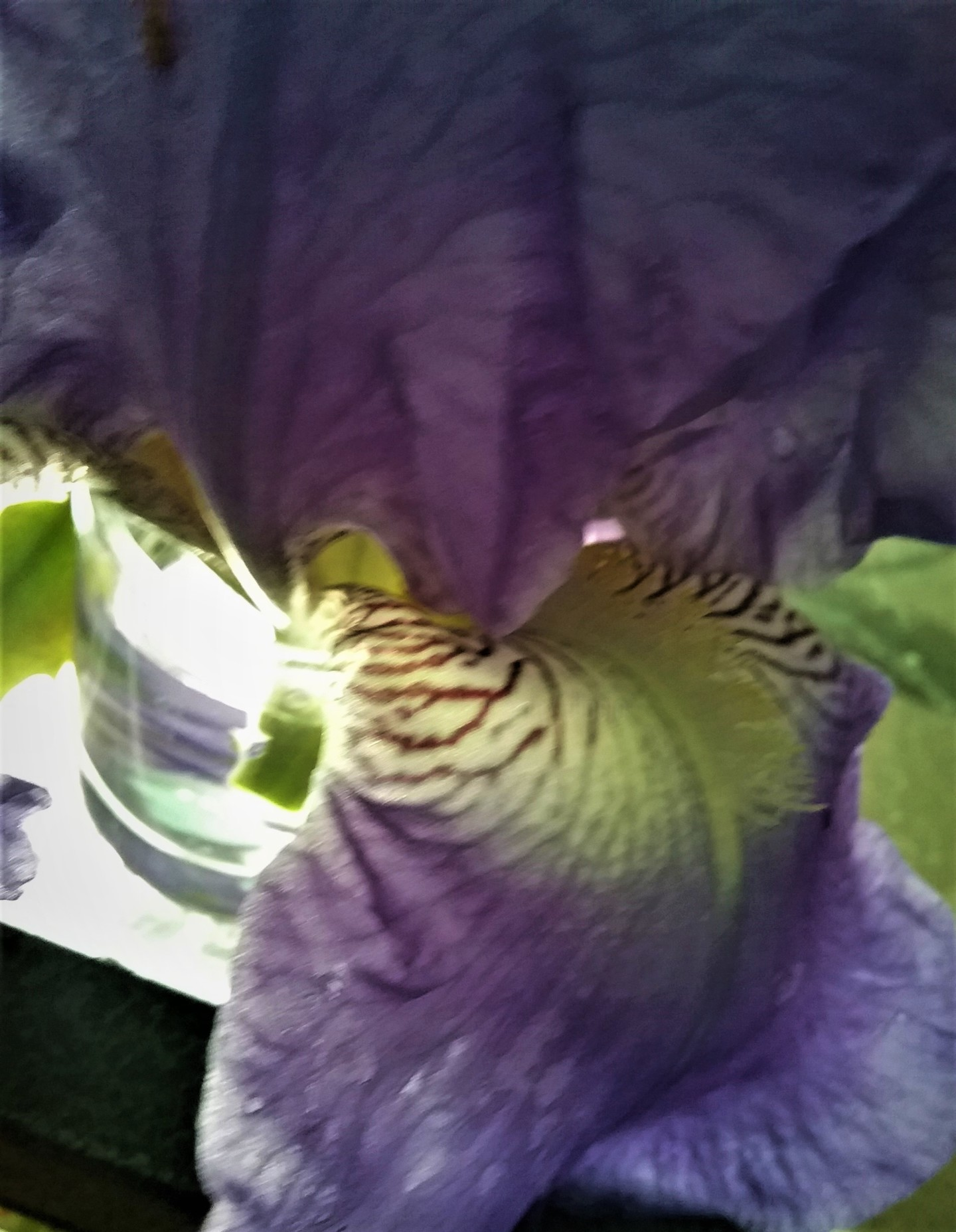 Claudette Allosio - coeur-iris3.jpg