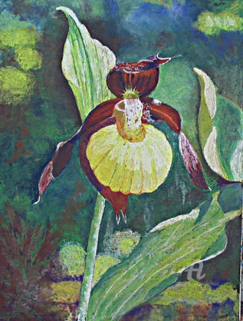Claudette Allosio - sabot de vénus