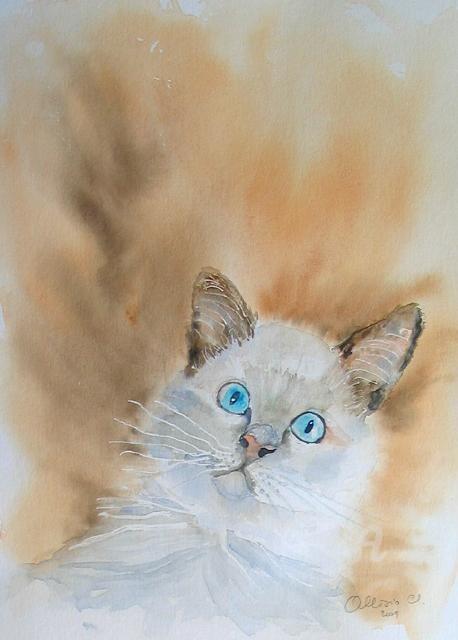 Claudette Allosio - chaton chartreux