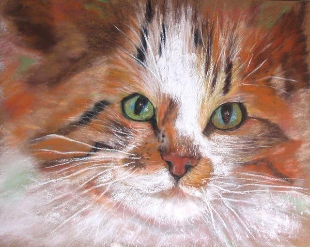 Claudette Allosio - regard felin