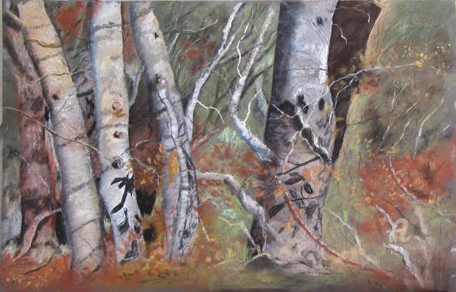 Claudette Allosio - fouillis forestier