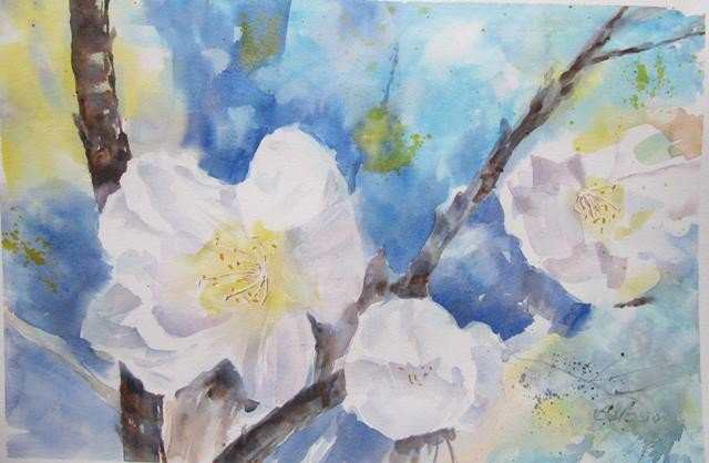 Claudette Allosio - Fleurs de cerisier