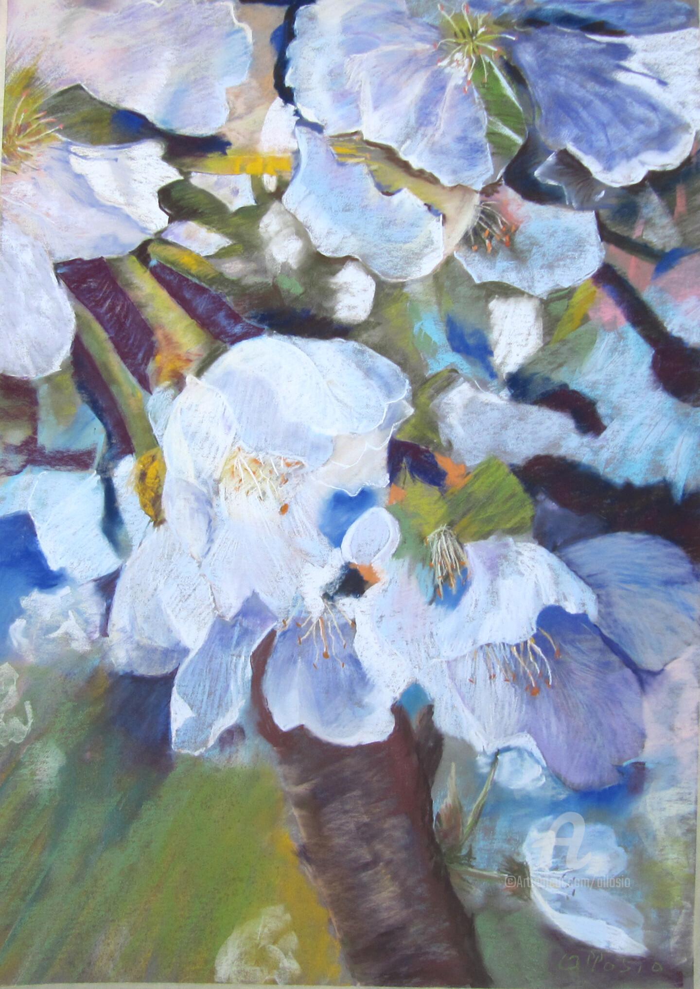 Claudette Allosio - cerisier en fleurs
