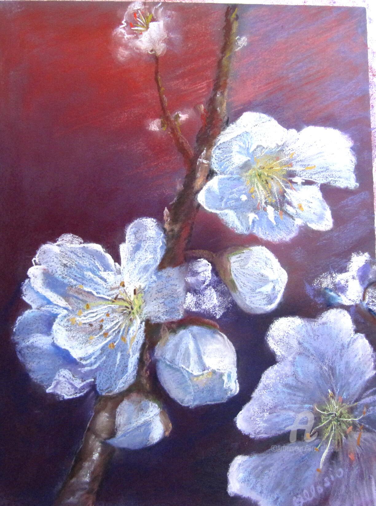 Claudette Allosio - fleurs de cerisier2