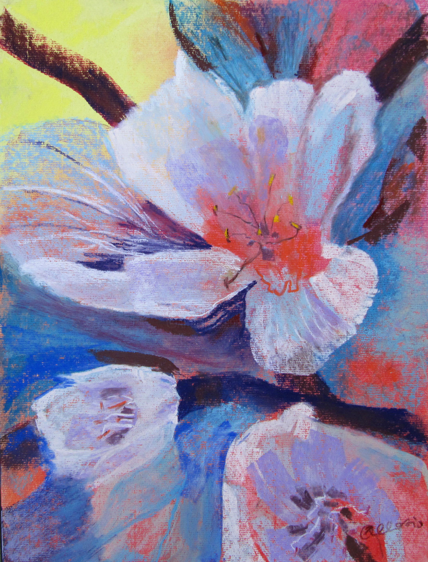 Claudette Allosio - cerisiers en fleur#artistsupportpledge