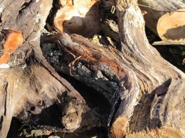 racine d'arbre2.jpg