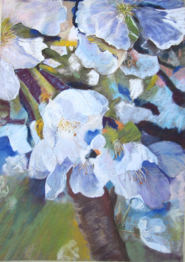cerisier-en-fleurs.jpg