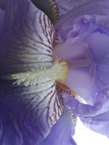 coeur-iris1.jpg