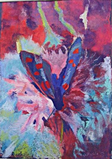 papillon  et centaurée